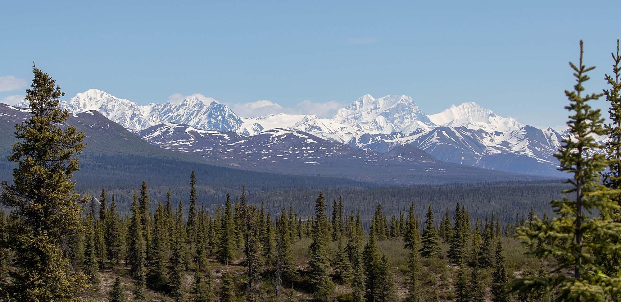 Taiga Denali Field Guides Birding Tours ALASKA USA