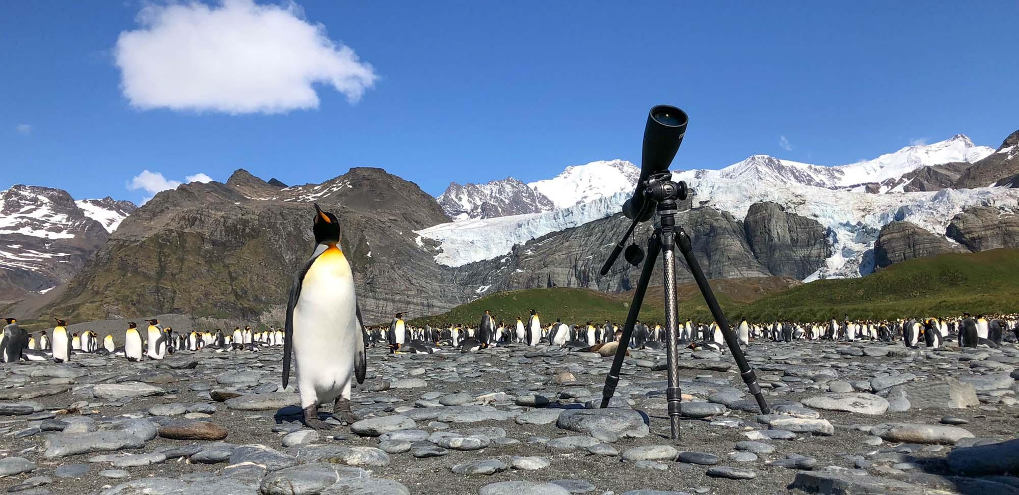 Fledgling birder Field Guides Birding Tours Antarctica