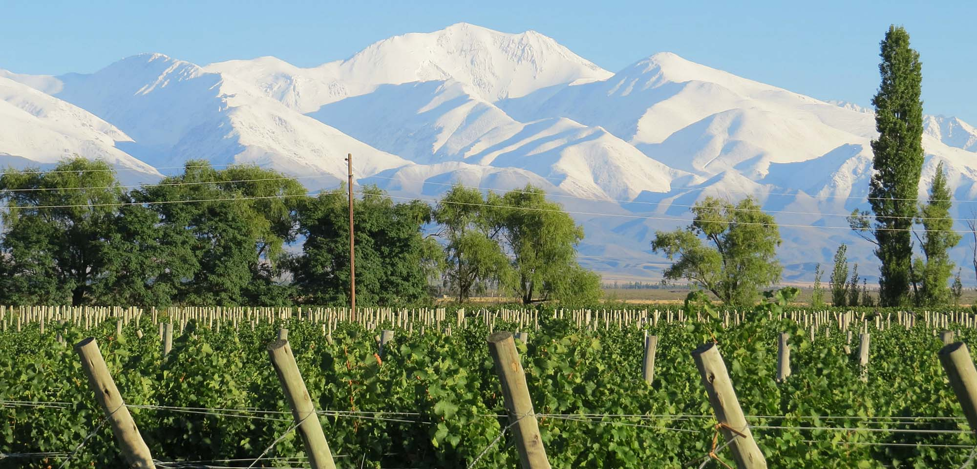vineyard and Andes Field Guides Birding Tours Chile Argentina