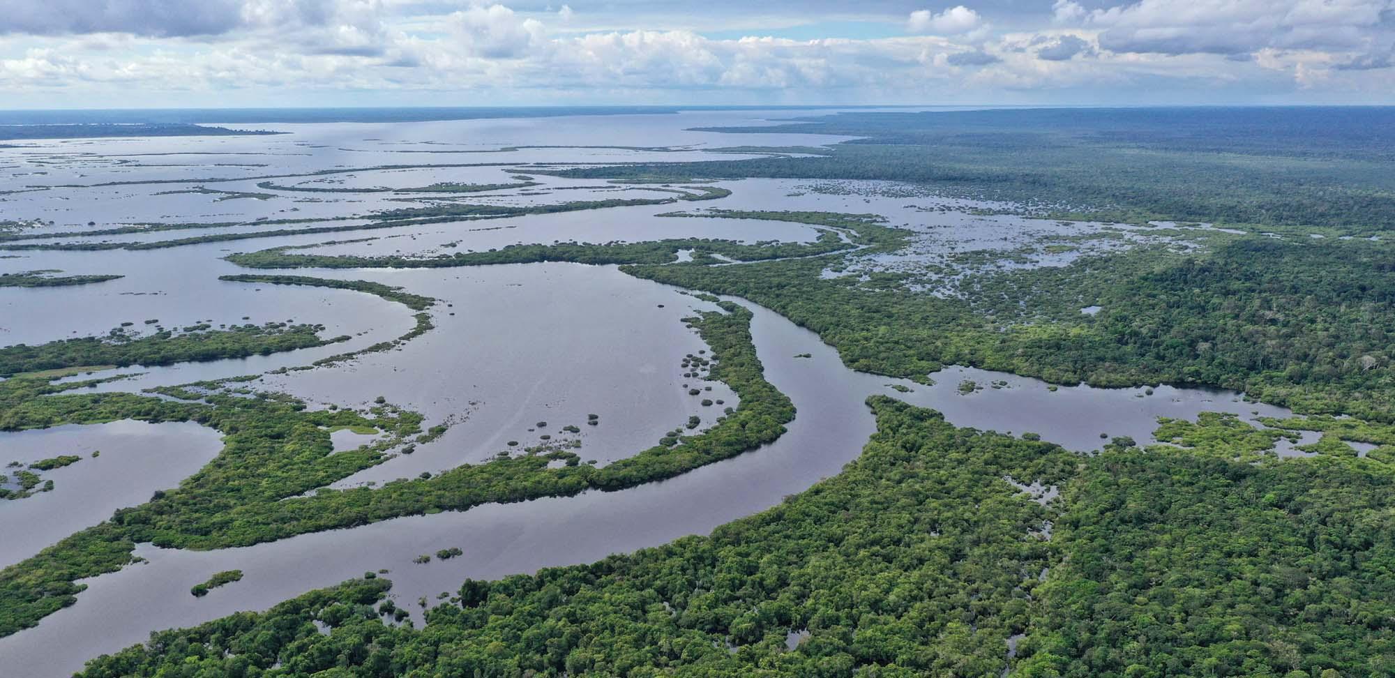 Upper Lago Tefe Field Guides Birding Tours Brazil