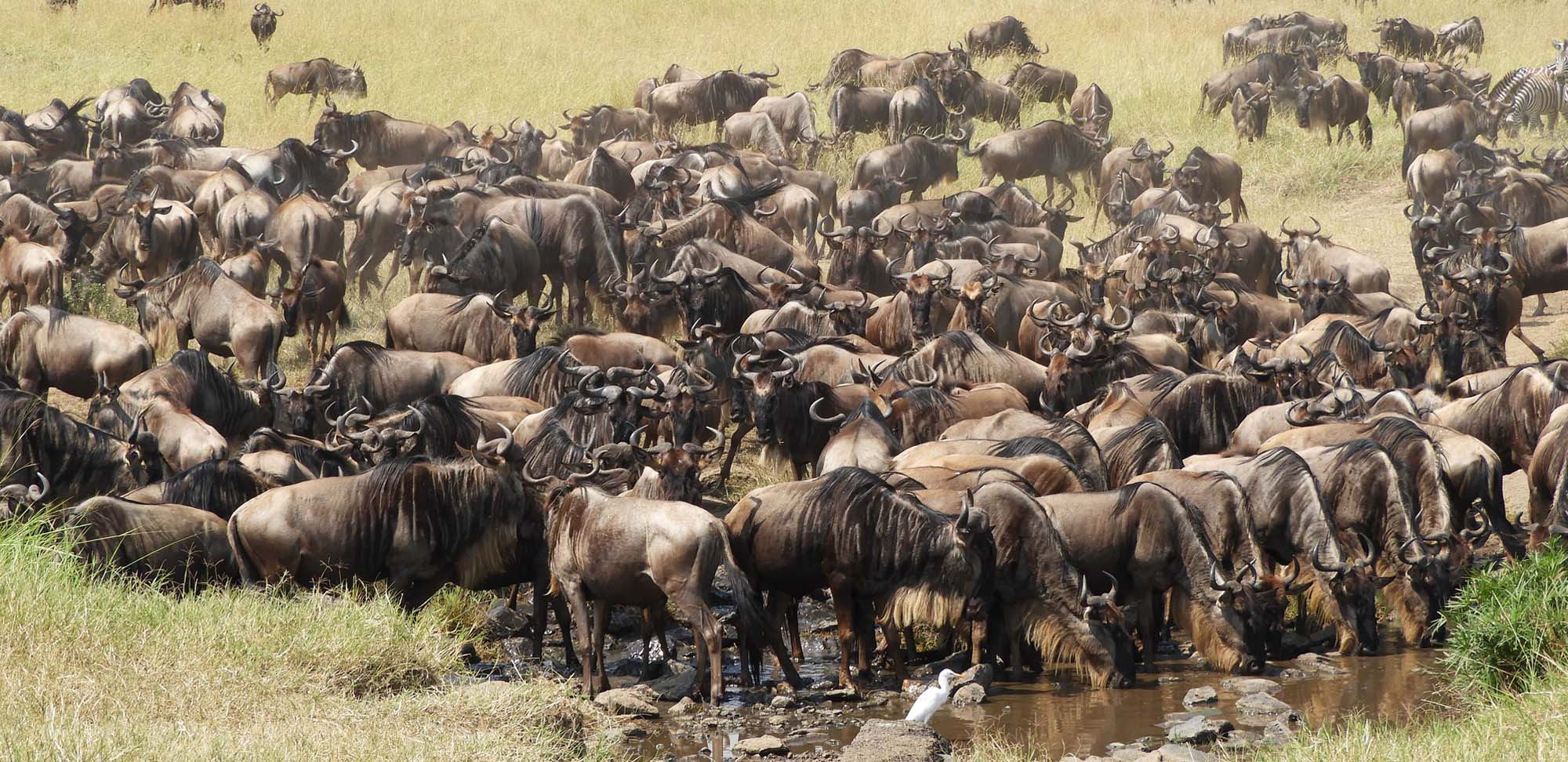 Wildebeest Field Guides Birding Tours Kenya