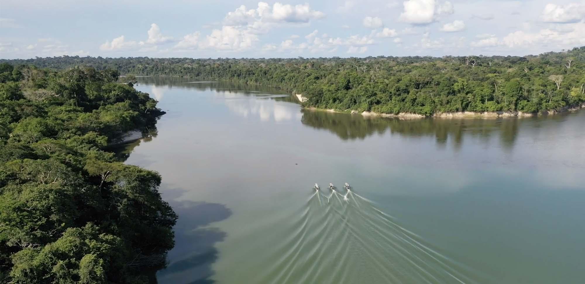 Roosevelt-meets-Maderinha Field Guides Birding Tours Brazil