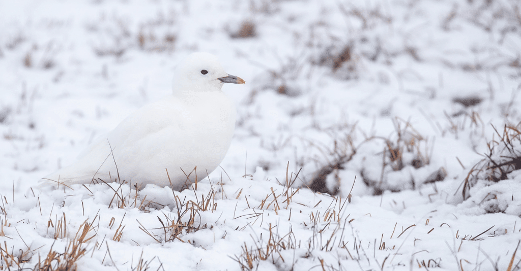 Alaska with Field Guides Birding Tours